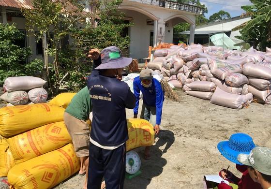 ĐBSCL: Nông dân bán lúa nhanh, giá gạo xuất khẩu tăng  ảnh 2
