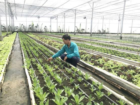 Phát triển nông nghiệp gắn với đô thị ảnh 1