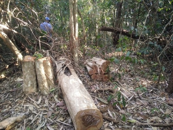 Khởi tố vụ phá rừng quy mô lớn ở Đắk Nông ảnh 2