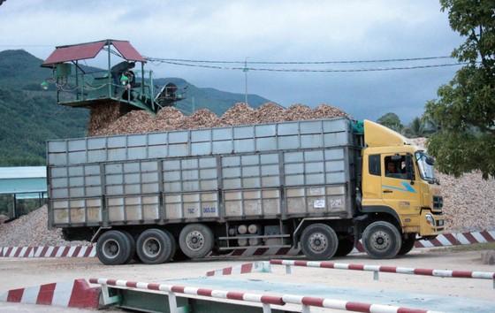 Bắt nghi phạm chủ mưu vụ phá 61ha rừng tự nhiên ở Bình Định ảnh 3