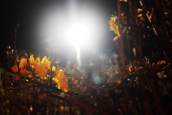 """Chủ mai Bình Định """"đổ bộ"""" QL1 chong đèn, dựng lều chào bán mai tết sớm ảnh 12"""
