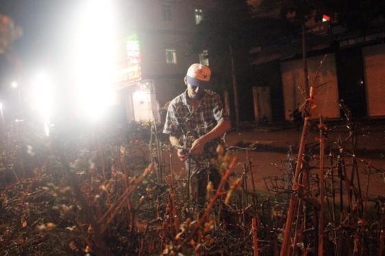"""Chủ mai Bình Định """"đổ bộ"""" QL1 chong đèn, dựng lều chào bán mai tết sớm ảnh 10"""