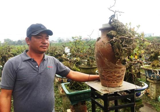 """Chủ mai Bình Định """"đổ bộ"""" QL1 chong đèn, dựng lều chào bán mai tết sớm ảnh 4"""