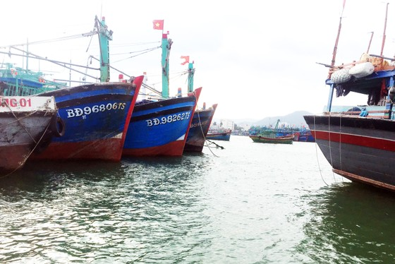 Bình Định yêu cầu DN tạm dừng các hoạt động xâm lấn cảng cá ảnh 6