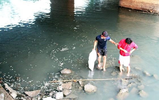 Làm rõ nguyên nhân cá chết trắng sông Bàu Giang ảnh 3