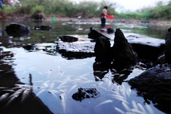 Làm rõ nguyên nhân cá chết trắng sông Bàu Giang ảnh 5