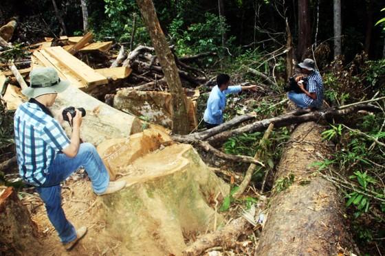"""Lâm tặc """"xẻ thịt"""" rừng phòng hộ Bình Định: Xem xét kỷ luật cán bộ, lãnh đạo để """"mất rừng"""" ảnh 3"""