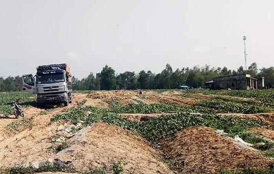 """Chủ cho vay nặng lãi """"vây"""" ruộng dưa của anh nông dân Bình Định để đòi nợ ảnh 1"""