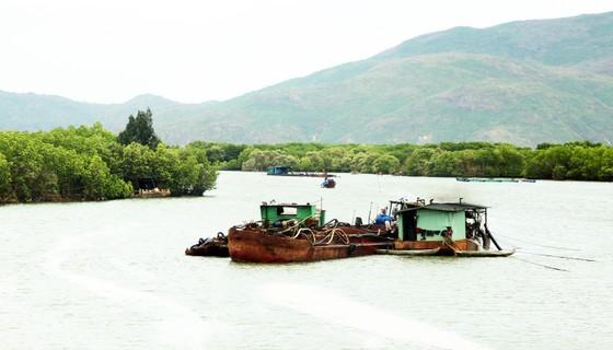 Rừng ngập mặn ven đầm Thị Nại đang bị băm nát ảnh 12