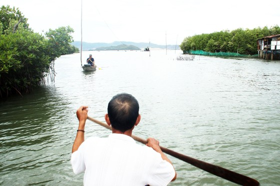 Rừng ngập mặn ven đầm Thị Nại đang bị băm nát ảnh 15