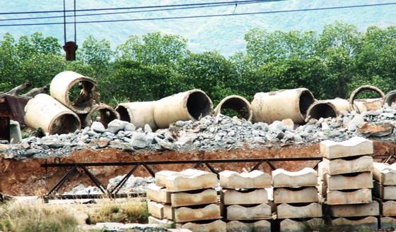 Rừng ngập mặn ven đầm Thị Nại đang bị băm nát ảnh 10