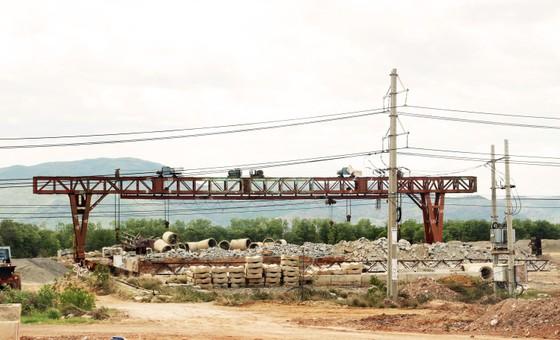 Rừng ngập mặn ven đầm Thị Nại đang bị băm nát ảnh 11