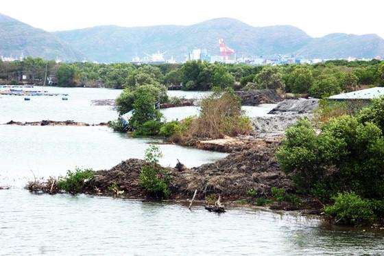Bình Định chỉ đạo khẩn trương làm rõ trách nhiệm doanh nghiệp hút cát ở đầm Thị Nại ảnh 9