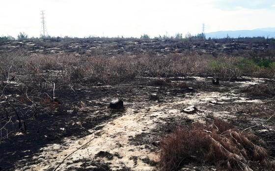 Phá trắng, đốt sạch trên 140ha rừng ở Bình Định ảnh 12