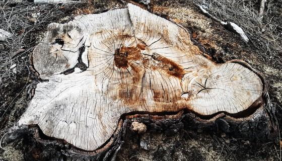Phá trắng, đốt sạch trên 140ha rừng ở Bình Định ảnh 8