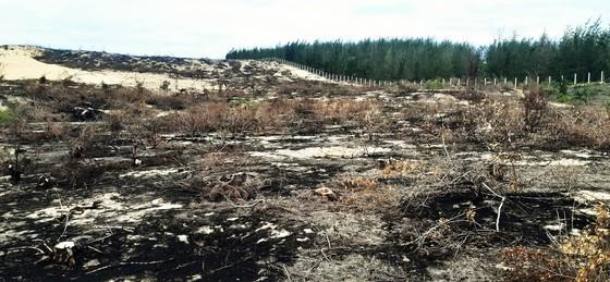 Phá trắng, đốt sạch trên 140ha rừng ở Bình Định ảnh 14