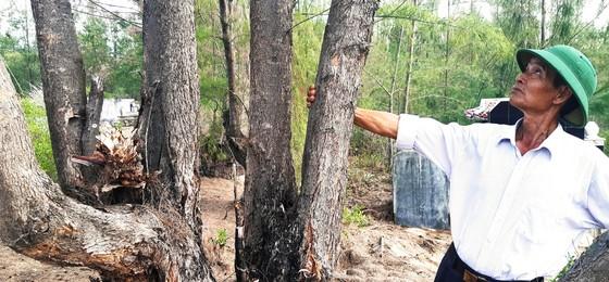 Phá trắng, đốt sạch trên 140ha rừng ở Bình Định ảnh 13