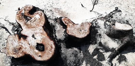 Phá trắng, đốt sạch trên 140ha rừng ở Bình Định ảnh 5