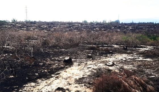 Phá trắng, đốt sạch trên 140ha rừng ở Bình Định ảnh 1