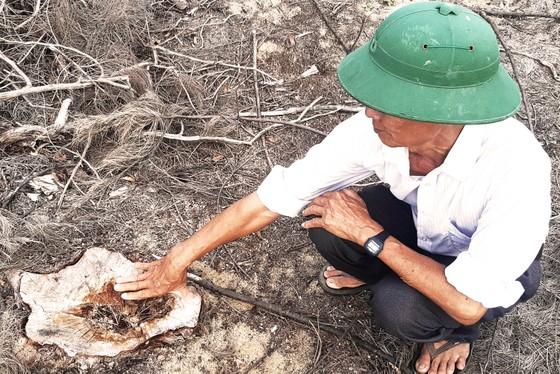 Phá trắng, đốt sạch trên 140ha rừng ở Bình Định ảnh 9