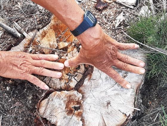 Phá trắng, đốt sạch trên 140ha rừng ở Bình Định ảnh 10
