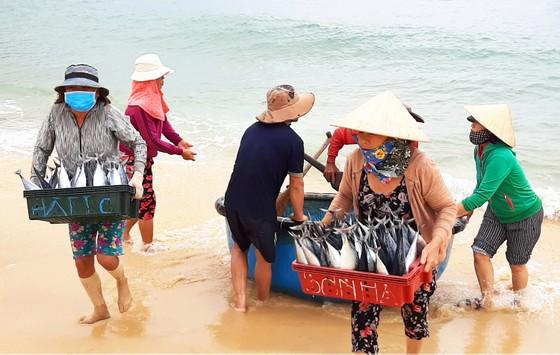 Biển gần bờ xuất hiện nhiều đàn cá, ngư dân Bình Định trúng lớn ảnh 1