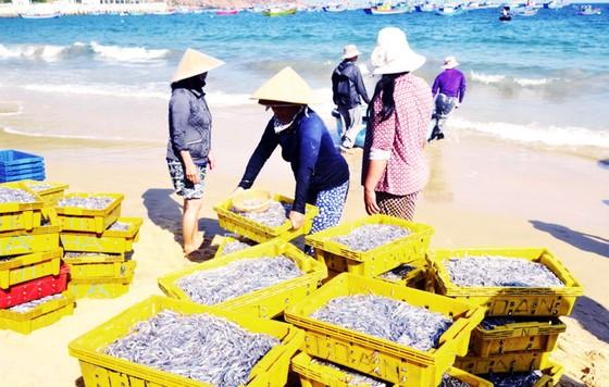 Biển gần bờ xuất hiện nhiều đàn cá, ngư dân Bình Định trúng lớn ảnh 2