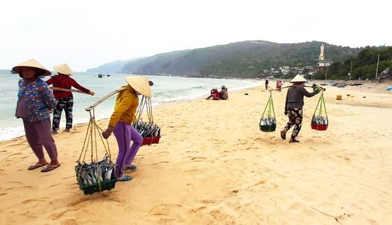 Biển gần bờ xuất hiện nhiều đàn cá, ngư dân Bình Định trúng lớn ảnh 4