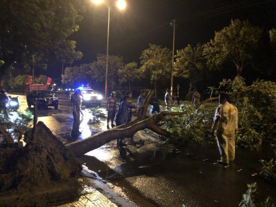 Bão Matmo đổ bộ quật ngã hàng loạt cây xanh  ảnh 9