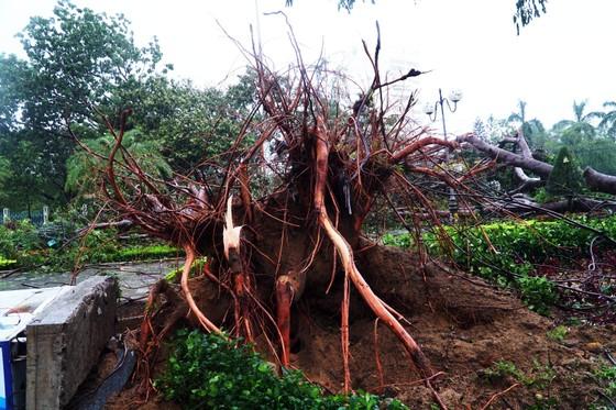Phố biển Quy Nhơn tan hoang sau bão Matmo ảnh 3