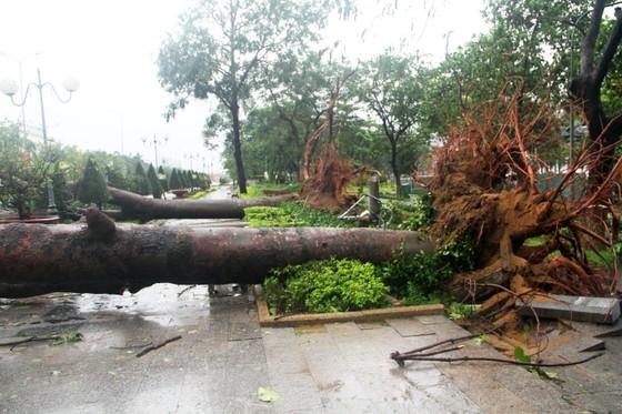 Phố biển Quy Nhơn tan hoang sau bão Matmo ảnh 1