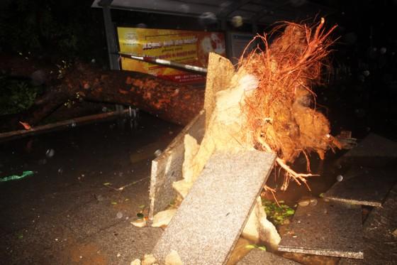 Bão Matmo đổ bộ quật ngã hàng loạt cây xanh  ảnh 2