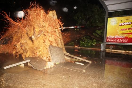 Bão Matmo đổ bộ quật ngã hàng loạt cây xanh  ảnh 5