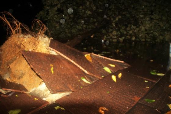 Bão Matmo đổ bộ quật ngã hàng loạt cây xanh  ảnh 4