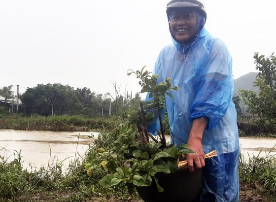 Vựa mai lớn nhất miền Trung đưa mai đi tránh bão ảnh 8
