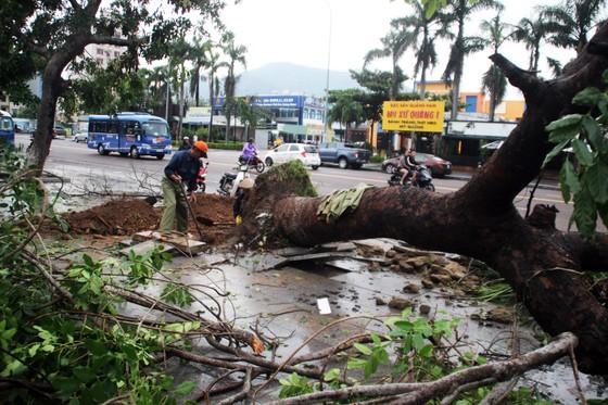 Dọn hàng ngàn tấn rác thải, khôi phục 2.000 cây xanh bị bão quật ngã ảnh 8
