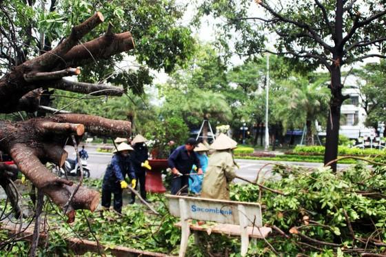 Dọn hàng ngàn tấn rác thải, khôi phục 2.000 cây xanh bị bão quật ngã ảnh 9
