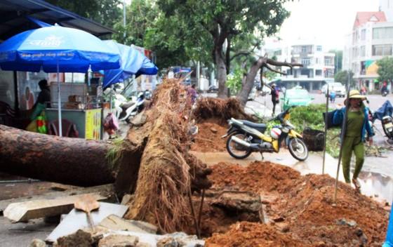 Dọn hàng ngàn tấn rác thải, khôi phục 2.000 cây xanh bị bão quật ngã ảnh 3