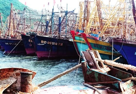 Bao giờ PJICO mới bán được bảo hiểm cho ngư dân? ảnh 1