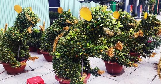 Ngắm bonsai quất tạo hình chuột độc đáo ở Bình Định ảnh 2
