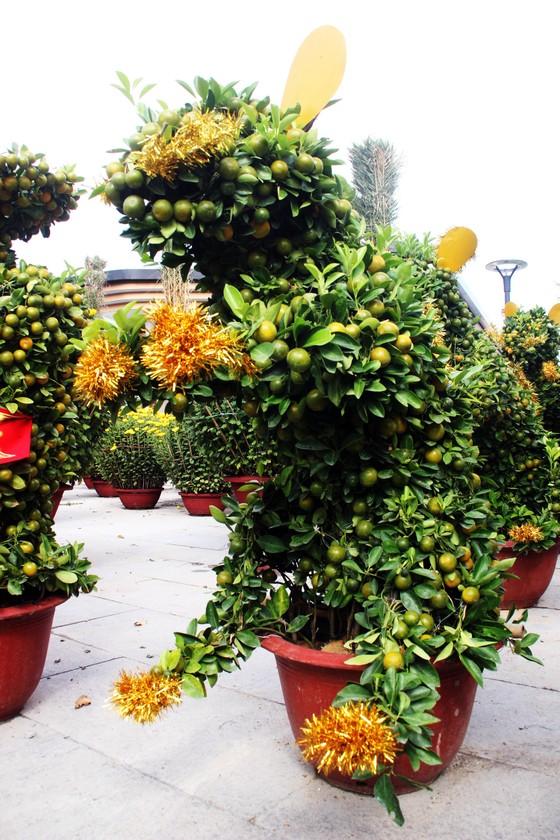 Ngắm bonsai quất tạo hình chuột độc đáo ở Bình Định ảnh 3