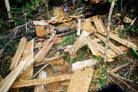 3 người phá rừng phòng hộ bị phạt 250 triệu đồng ảnh 1