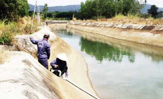 Thủy điện 'cứu hạn' cho hàng trăm hécta cây trồng ảnh 1