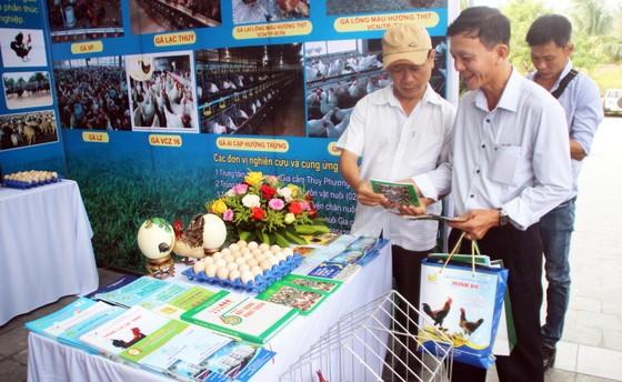 Lễ hội ẩm thực, quảng bá sản phẩm gà tại Bình Định ảnh 5