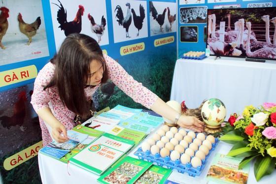 Lễ hội ẩm thực, quảng bá sản phẩm gà tại Bình Định ảnh 6