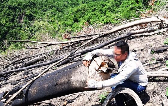 Rừng Thượng Sơn bị tàn phá nghiêm trọng ảnh 6
