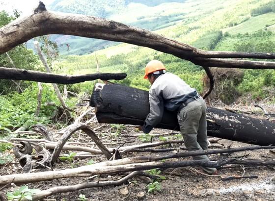 Rừng Thượng Sơn bị tàn phá nghiêm trọng ảnh 1
