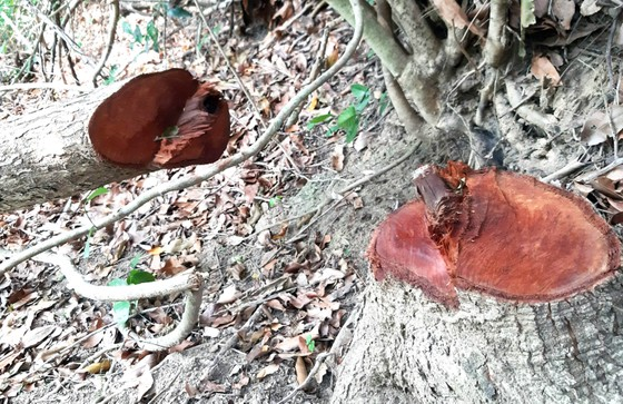 Rừng Thượng Sơn bị tàn phá nghiêm trọng ảnh 5