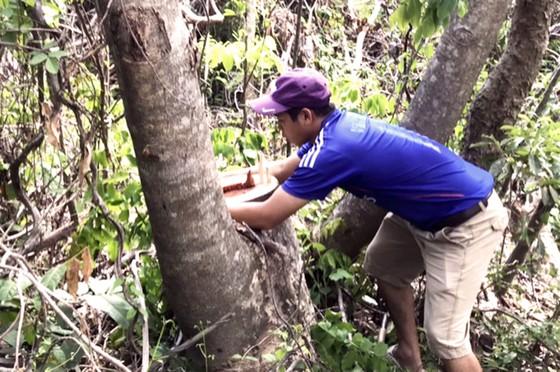 Rừng Thượng Sơn bị tàn phá nghiêm trọng ảnh 10