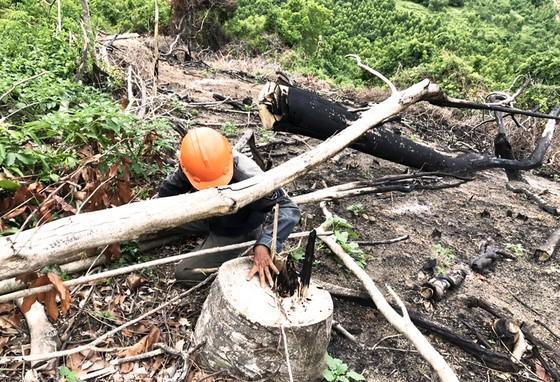 Rừng Thượng Sơn bị tàn phá nghiêm trọng ảnh 11